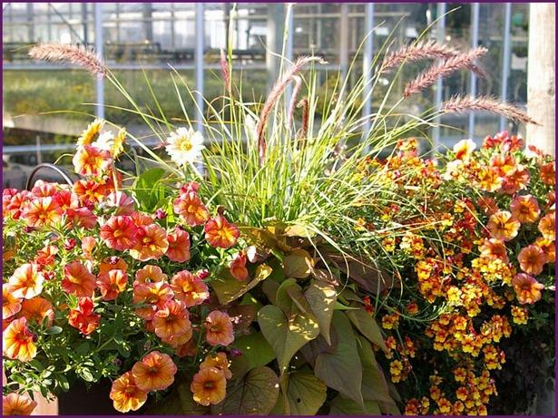 balkon bepflanzen ideen On balkonbepflanzung sommer