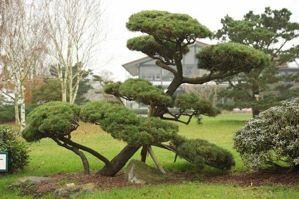 Kleine Bäume Für Steingarten
