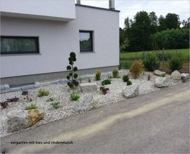 Vorgarten Mit Buchsbaum Und Kies