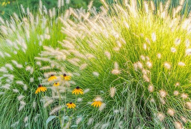 Vorgarten Mit Gräser Gestalten