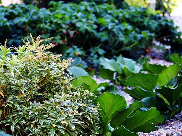 Pflanzen Nordseite