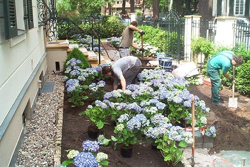 Gartengestaltung mit buchs und hortensien for Gartengestaltung langer garten