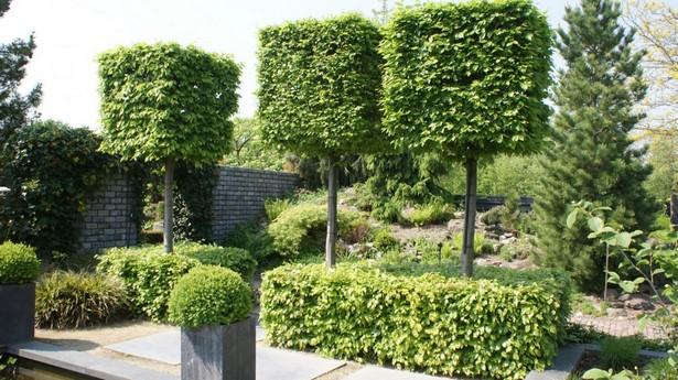 Moderne Bäume Für Den Garten