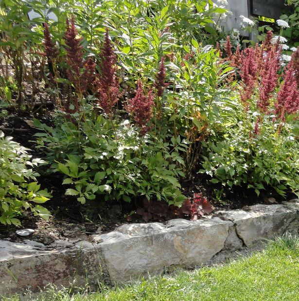 steilen hang bepflanzen