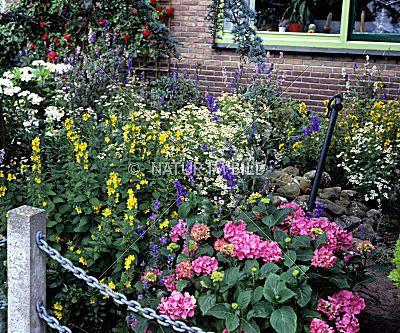 Vorgarten Blumen