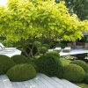 Exklusives gartendesign