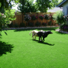 Backyard landscaping ideas for dogs